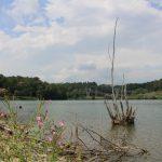 lago-bertignano-1280