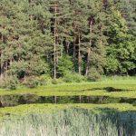 lago-di-meugliano-laghetto-1280-web