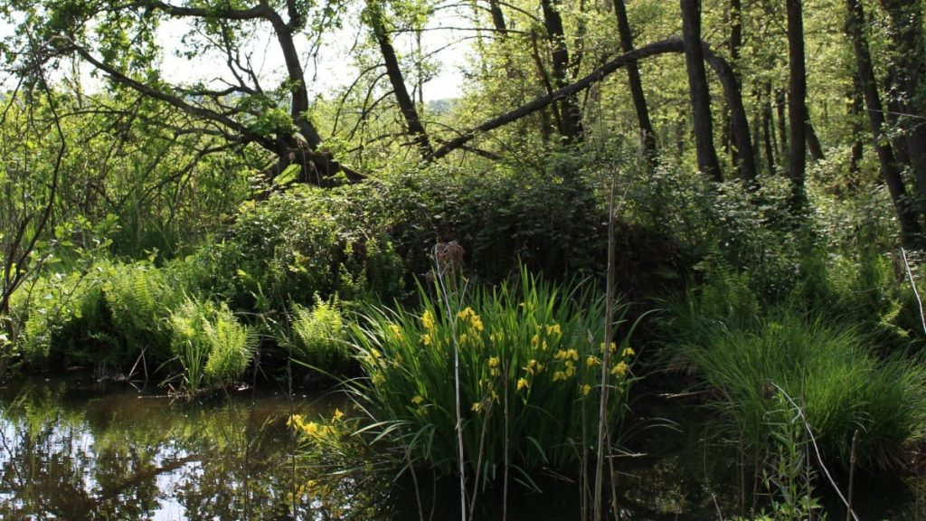 parco-naturale-lago-di-candia-paludetta-1200 web